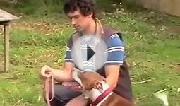 Free Dog Training Videos Online - How to Make Your Dog