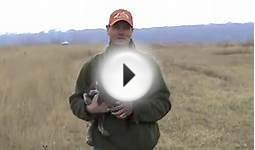 Free Hunting Dog Training Videos - Clicker Training with